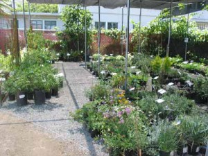 nursery at ELSEE garden
