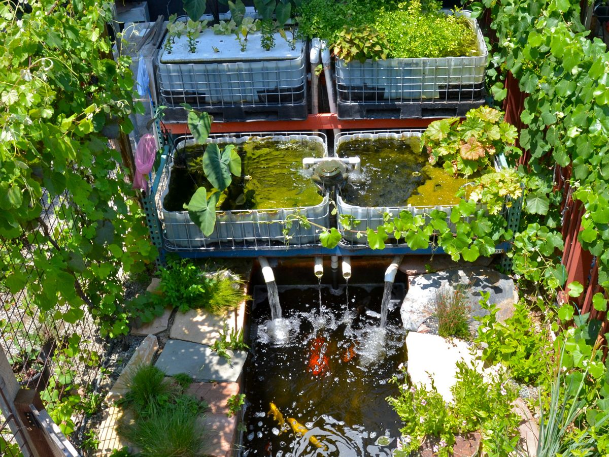 upcoming events aquaponics workshop and install the