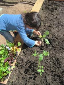 Planting Edibles