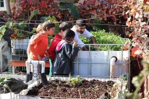 Sampling the vegetation