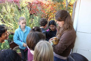 Petting one of our garden chickens.