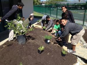 This garden serves as an outdoor teaching classroom
